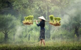 Когда лучше отдыхать во Вьетнаме? Сезоны и погода по месяцам