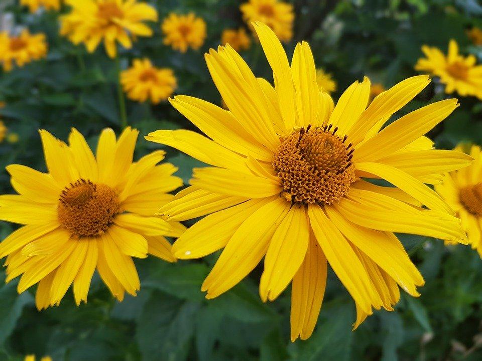 Июль цветы